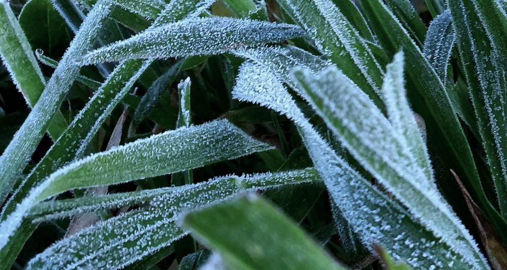Em pleno verão, serra de SC registra baixas temperaturas e geada