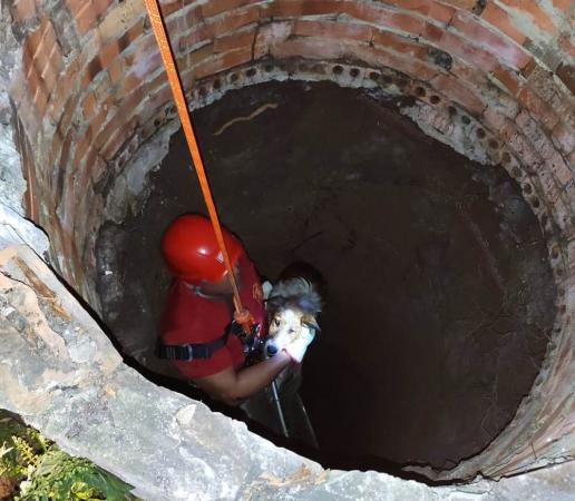Bombeiros resgatam cachorro de poço com 10 metros de profundidade no interior do PR